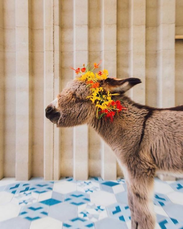 BfOnr8wjaT8-png__700 These 25+ Cute Baby Donkeys Are Everything You Need To See Today Design Random