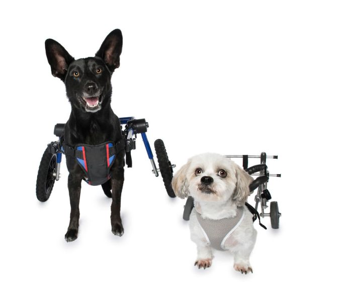 Reuben And Keisha In Their Wheelchairs