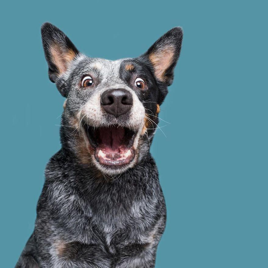 """""""Fido, You Are Adopted!"""" curiosas fotos de perros"""