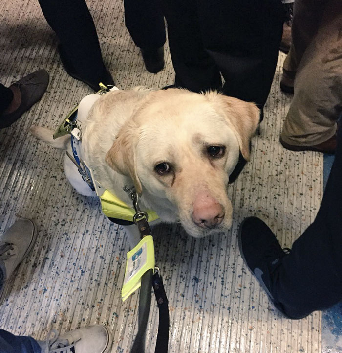 blind-man-guide-dog-no-one-offers-train-seat-london-amit-patel-18-5abde4663bd15__700 Blind Man Left In 'Tears' After Nobody Gave Up Their Seat For Him And His Guide Dog On The Train Design Random