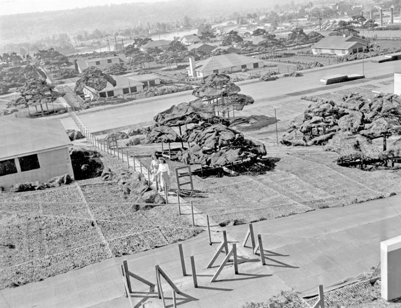"boeing fake rooftop town world war seattle 11 5aa65568ea9aa  880 - 2ª Guerra: EUA projeta um ""bairro falso"" para eliminar possíveis ataques aéreos"