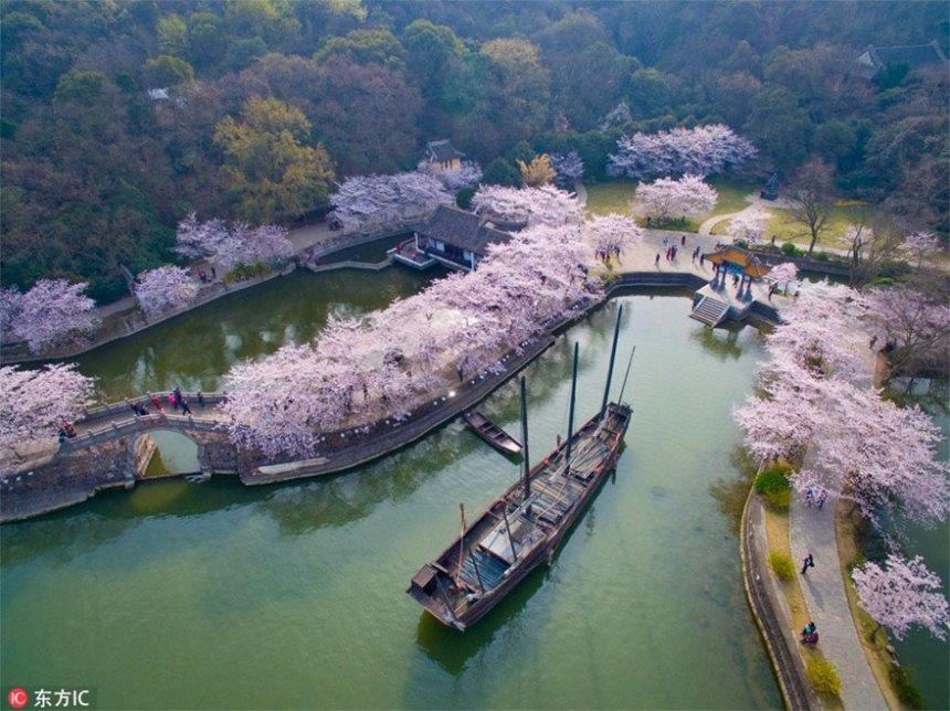 Cherry-Blossoms-Primavera-Cina