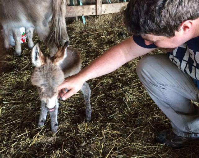 Lo encontraron en el granero y fue completamente inesperado