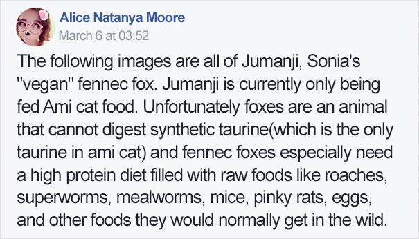 fennec-fox-vegan-diet-animal-abuse-jumanji-sonia-sae-40