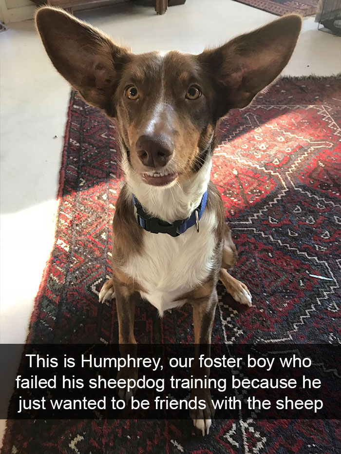 Funny-Dogs-Photos-Snapchats