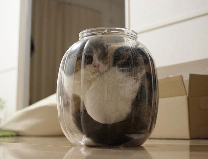 A Jar Of Cat