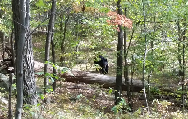 West Milford Took This Photo While On A Hike In New Jersey, Moments Before The Bear Attacked And Killed Him