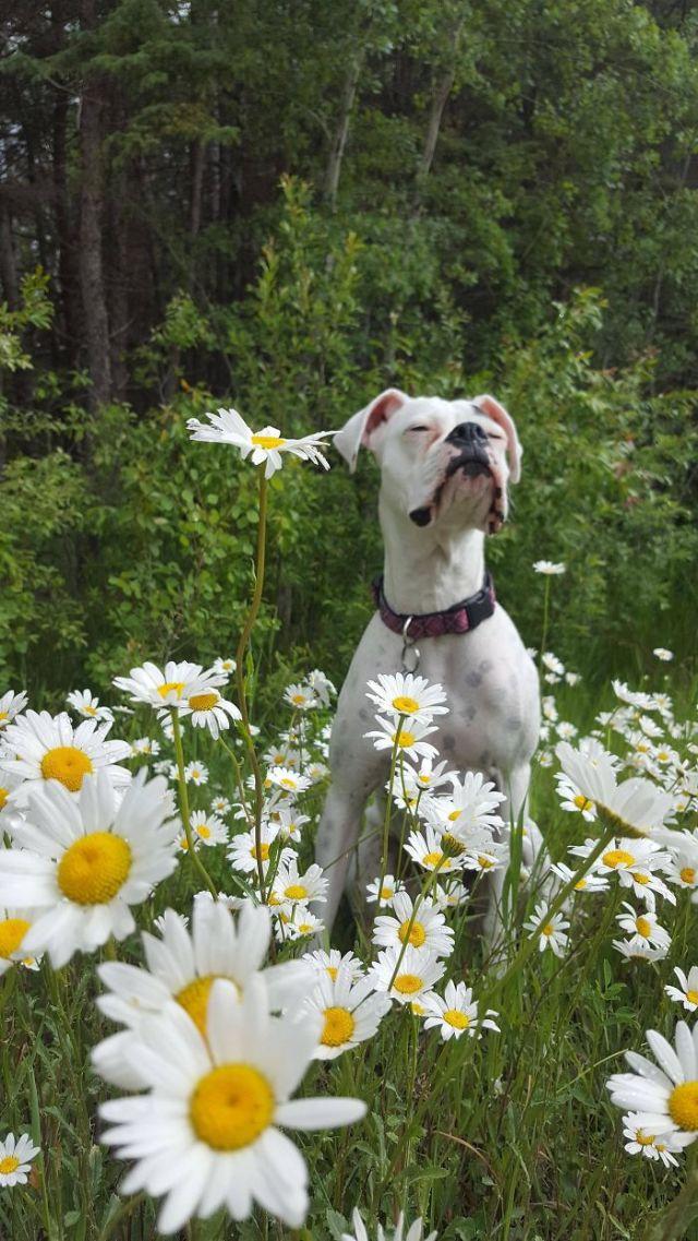 Mi perro disfrutando de un campo de margaritas