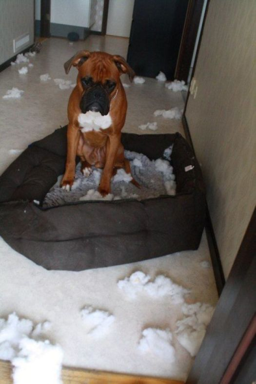 I Think He Immediately Regrets His Decision To Shred His Bed