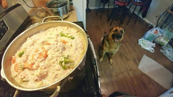 He Knows I'm Making His Food (Rice, Oatmeal, Ground Turkey And Frozen Veggies. $15 For 15 Lbs)