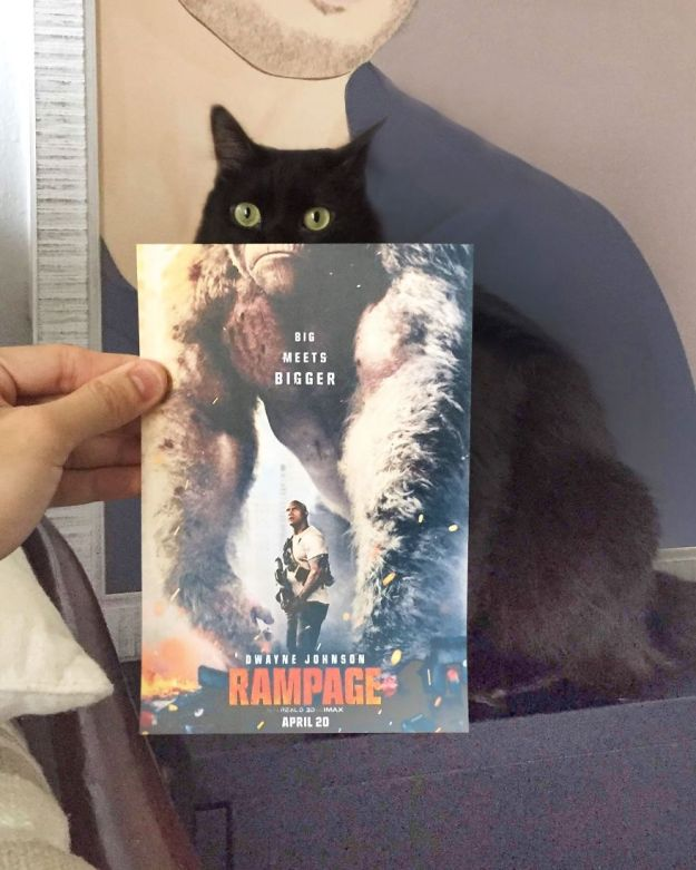 """IMG_9377-5b3b82e2363d1__880 Photographer Follows Cats Around To """"Insert"""" Them Behind Famous Movie Posters, And The Result Is Purrfect Design Random"""