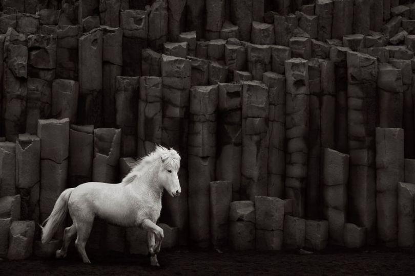 animal photography icelandic horses in the realm of legends drew doggett 23 5b5afbfb7f016  880 - Encantadora série de fotografias de Drew Doggett e os cavalos islandeses