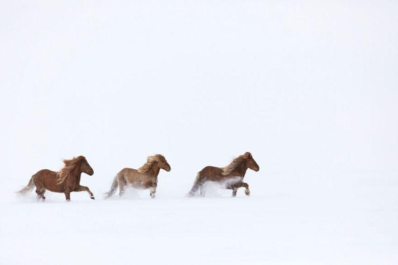 animal photography icelandic horses in the realm of legends drew doggett 35 5b5afc152e2bf  880 - Encantadora série de fotografias de Drew Doggett e os cavalos islandeses