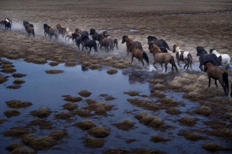 animal photography icelandic horses in the realm of legends drew doggett 5 5b5afbd66a094  880 - Encantadora série de fotografias de Drew Doggett e os cavalos islandeses