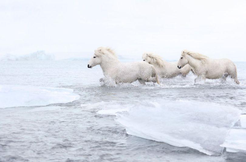 animal photography icelandic horses in the realm of legends drew doggett 7 5b5afbdaad0e3  880 - Encantadora série de fotografias de Drew Doggett e os cavalos islandeses