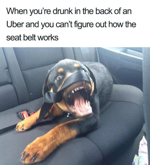 animals-using-uber-memes-3-5b4310e04ee30__700 15+ Of The Funniest Uber Memes With Animals Design Random