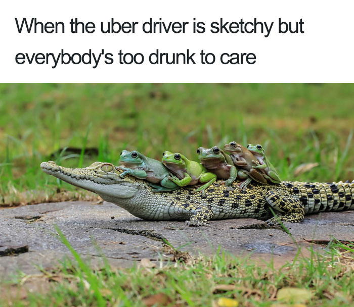 animals-using-uber-memes-6-5b4310e523ec2__700 15+ Of The Funniest Uber Memes With Animals Design Random