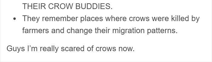 cuervos-animales inteligentes (4)