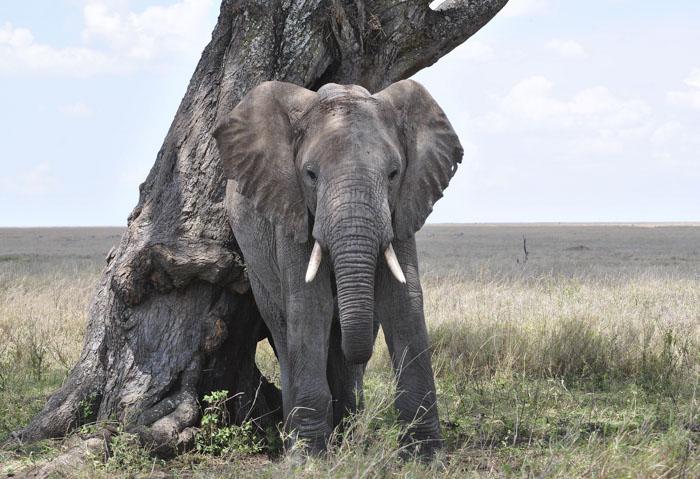 Elefantes autoconscientes