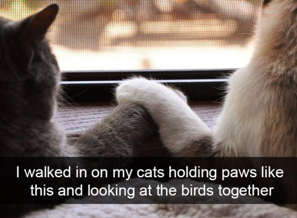 mačky, mačka, vtáci, zvierata, vtipne, momenty, zvierat, snapchat