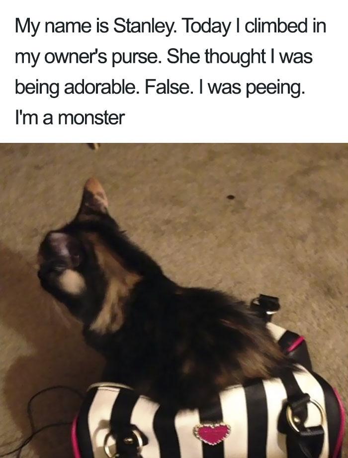 Funny-Cat-Shaming