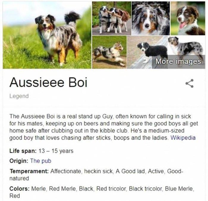 Aussieee Boi