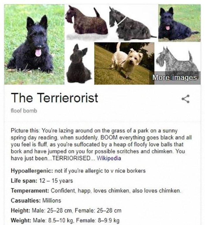 The Terrierorist