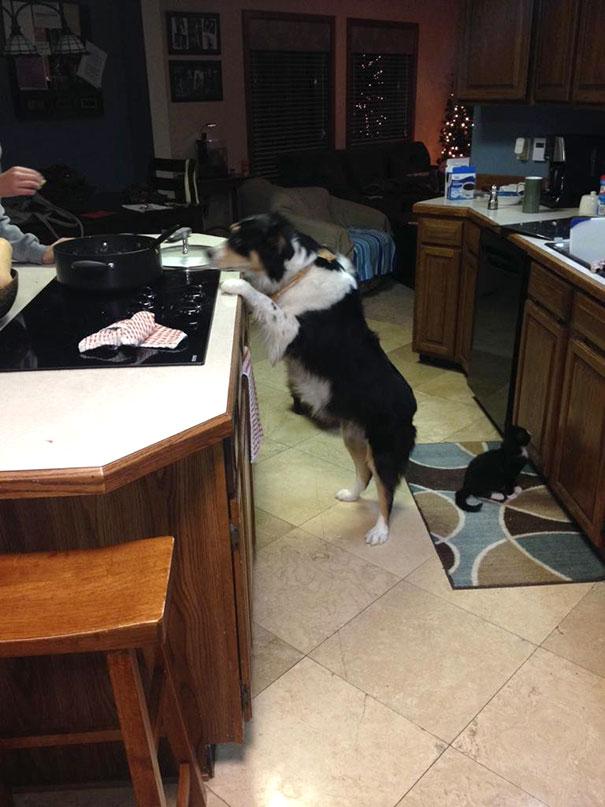 My Dog Begging For Food Vs My Blind Cat Begging For Food