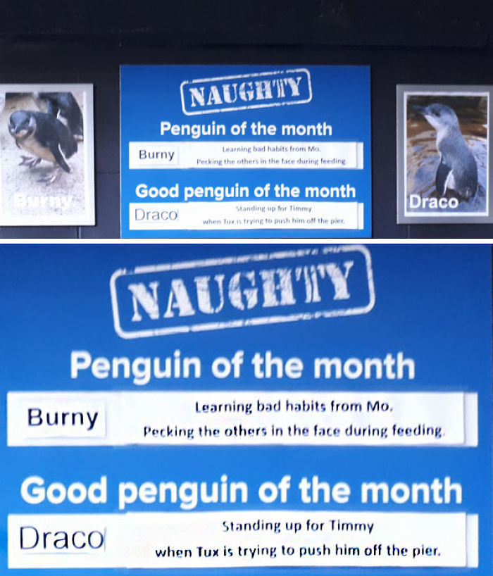 Funny-Penguin-Shaming-National-Aquarium-Nueva Zelanda [19659003] </p data-recalc-dims=