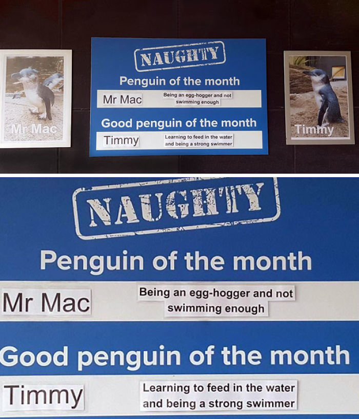 Funny-Penguin-Shaming-National-Aquarium-Nueva Zelanda