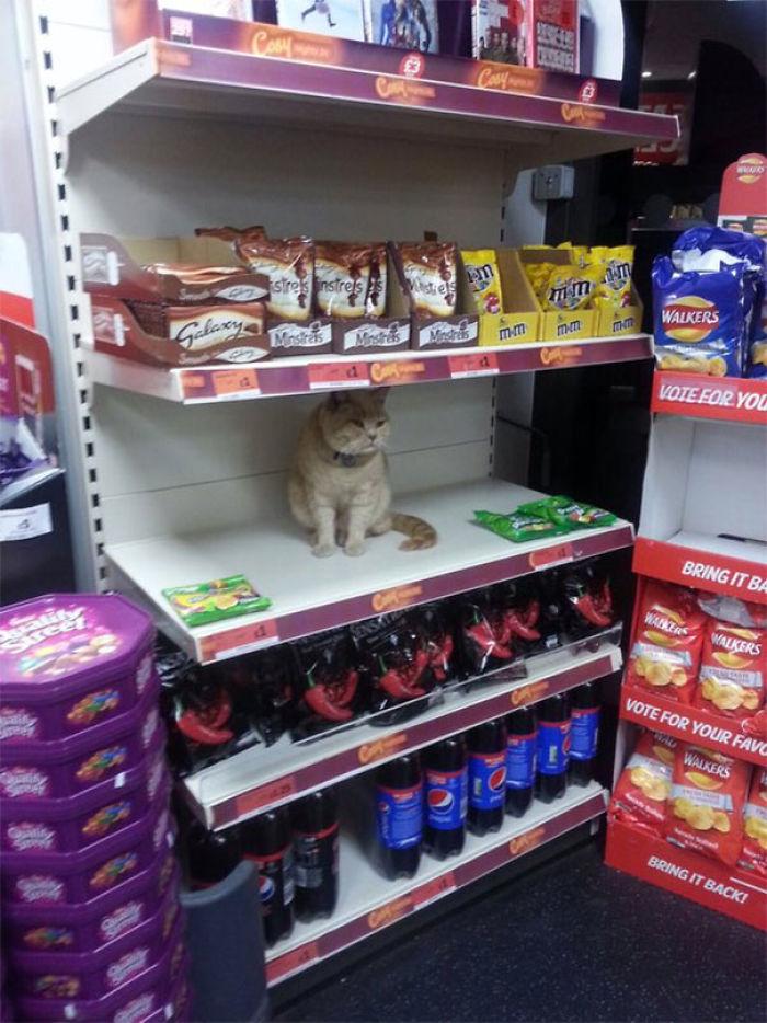 La seguridad intentó sacar a este gato de mi supermercado local. Fallido