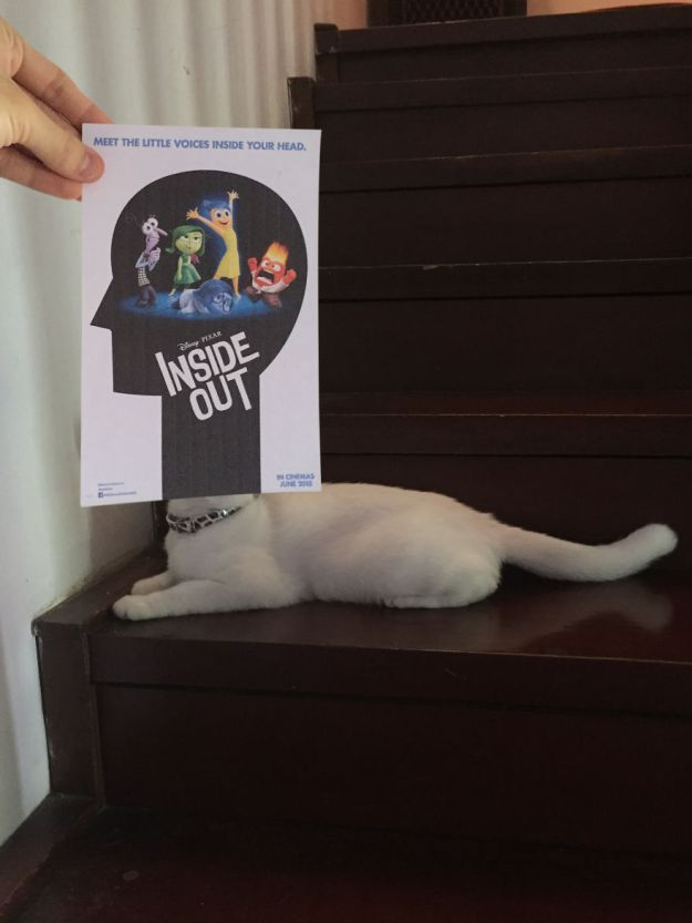 """inside-5b3b82e79ad6c__880 Photographer Follows Cats Around To """"Insert"""" Them Behind Famous Movie Posters, And The Result Is Purrfect Design Random"""