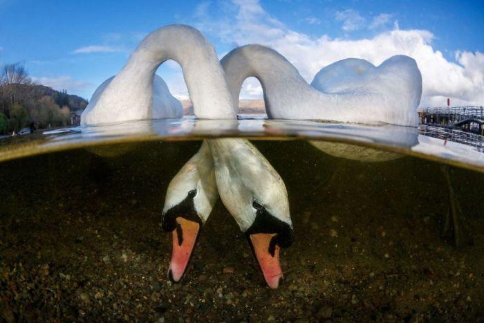 "British Underwater Photographer Of The Year. ""Love Birds"" By Grant Thomas, Uk"