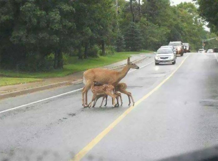 Just Another Attention Seeking Mother Nursing In Public