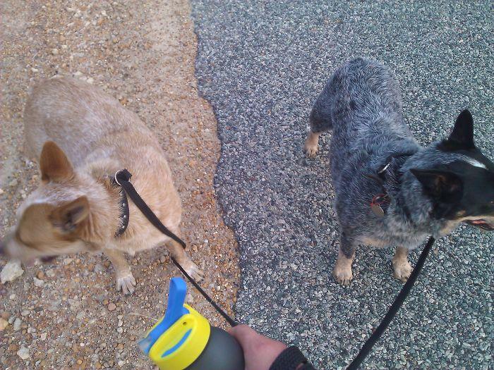 Mis perros se han convertido en sepia