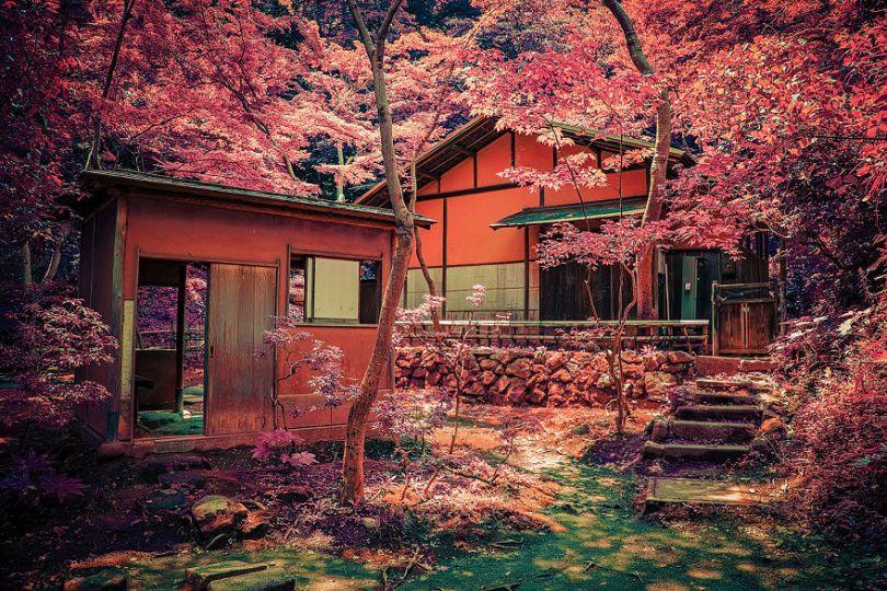 After 20 Years I finally got to do a child dream and photograph Japans Beauty 5b9ab2ce3c1e1  880 - Fotos do Japão como você nunca viu