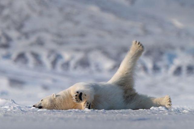 Oso yoga