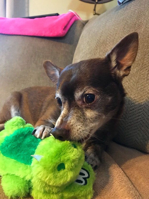 1-5bcec3ba63a08__700 Pet Store Discontinues The Only Toy This Elderly Dog Plays With So Owner Asks Help From The Internet Design Random