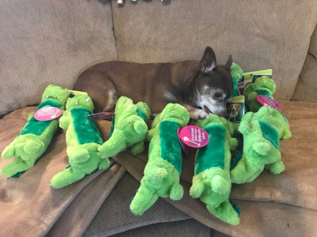 4-5bcec52ed8eca__700 Pet Store Discontinues The Only Toy This Elderly Dog Plays With So Owner Asks Help From The Internet Design Random