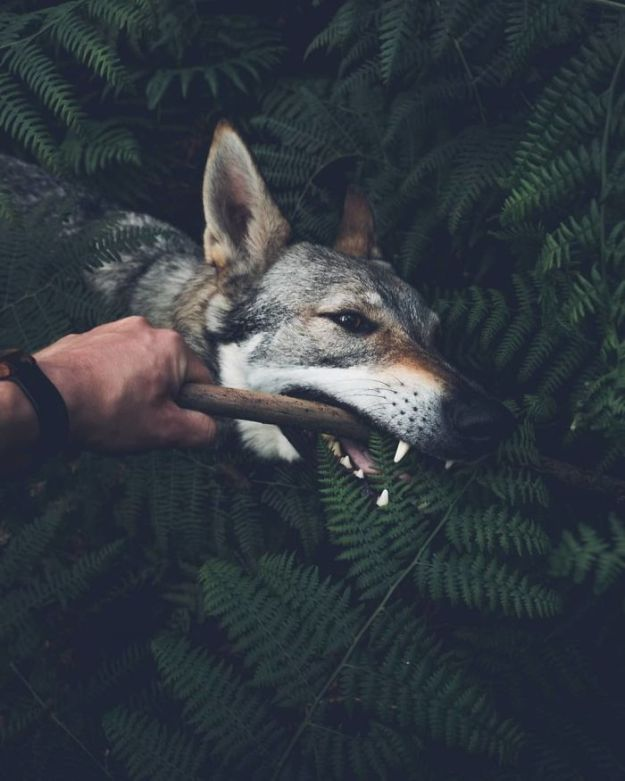Bk5Gxu2H3RR-png__700 Tired Of #FollowMeTo Instagram Pics? This Guy Pets His Dog Everywhere He Goes, And It's 1000 Times Better Design Photography Random