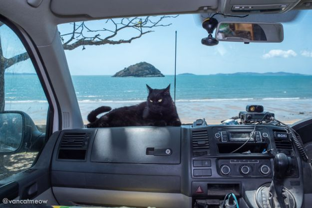 DSC_8528-5bd15b30ba019__880 I Spent Over 3 Years Traveling With My Cat In A Campervan Design Random Travel