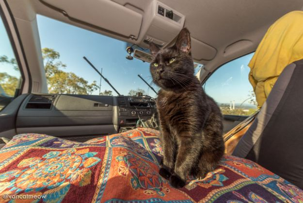 DSC_8641-5bd15b3d9d0be__880 I Spent Over 3 Years Traveling With My Cat In A Campervan Design Random Travel