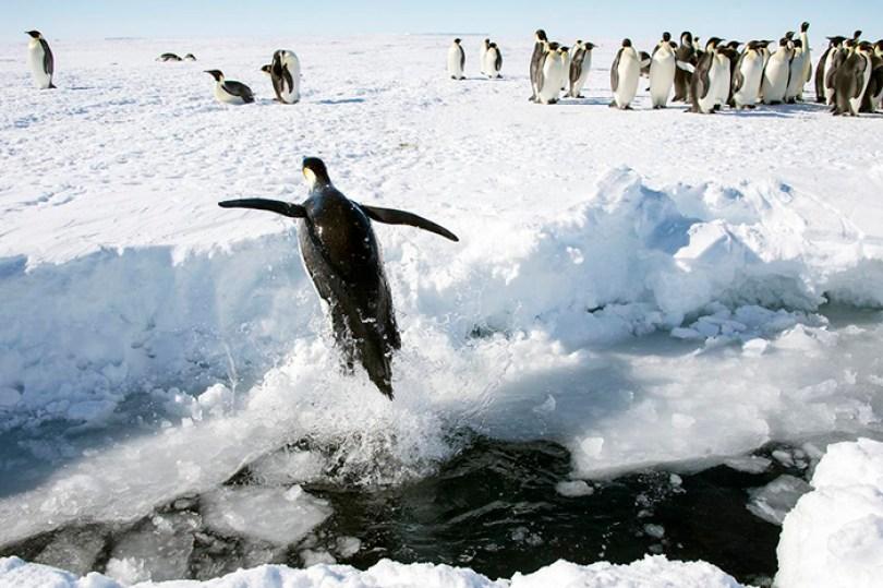 interesting antarctica facts south pole 5bd97cc42c1a8  700 - Fatos sobre a Antártica que você provavelmente ainda não sabia (Parte 2)