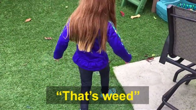schoolgirl-tells-teacher-father-growing-weed-30 Daughter Tells Her Teachers That Dad Is Growing 'A Ton Of Weed' At Home, And It Escalates Hilariously Design Random