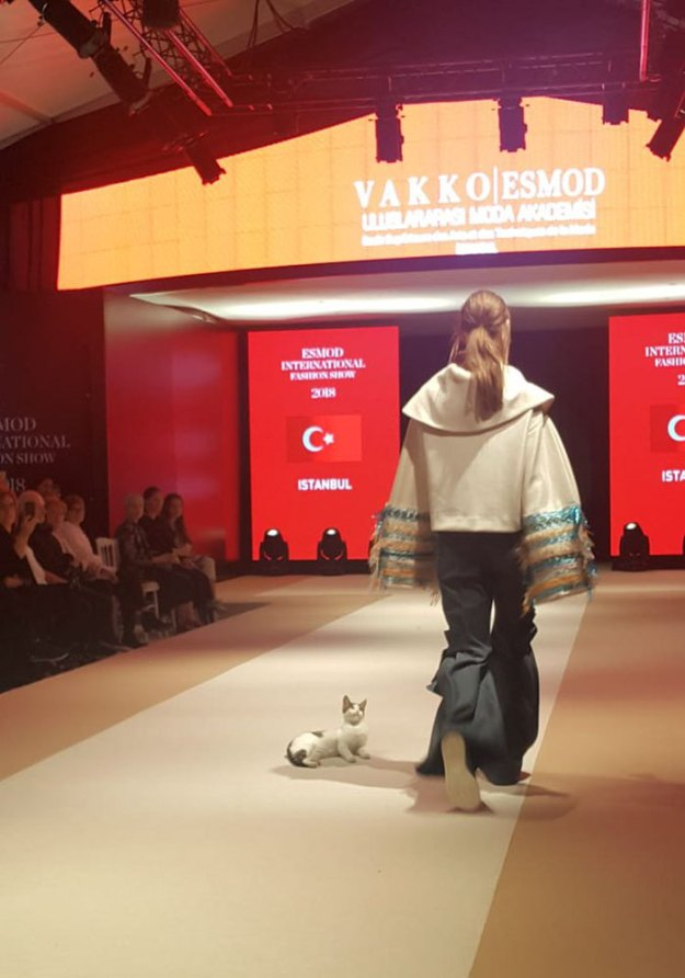 stray-cat-istanbul-fashion-show-vakko-esmod-5bd6bc4334437__700 Random Cat Crashes Fashion Show, Fights Models Design Random