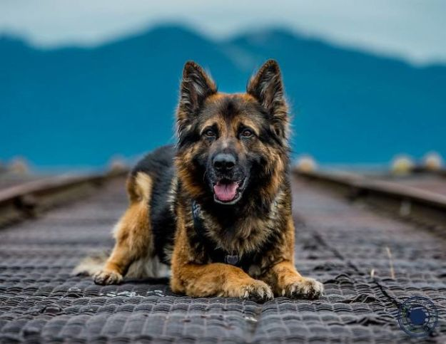 vancouver-police-department-charity-dog-calendar-2019-10-5bd16e0bd5121__700 Vancouver Police Canine Unit Just Released Their 2019 Charity Calendar And It's Badass Design Random