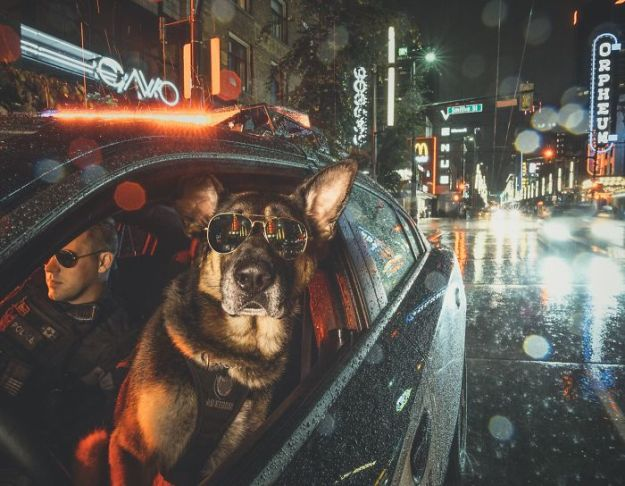 vancouver-police-department-charity-dog-calendar-2019-2-5bd16d9fd1323__700 Vancouver Police Canine Unit Just Released Their 2019 Charity Calendar And It's Badass Design Random