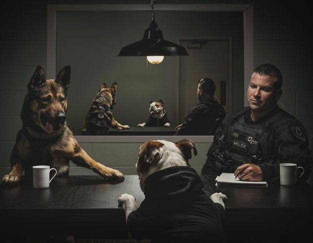vancouver-police-department-charity-dog-calendar-2019-3-5bd16db14b763__700 Vancouver Police Canine Unit Just Released Their 2019 Charity Calendar And It's Badass Design Random