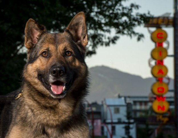 vancouver-police-department-charity-dog-calendar-2019-7-5bd16e018d67d__700 Vancouver Police Canine Unit Just Released Their 2019 Charity Calendar And It's Badass Design Random