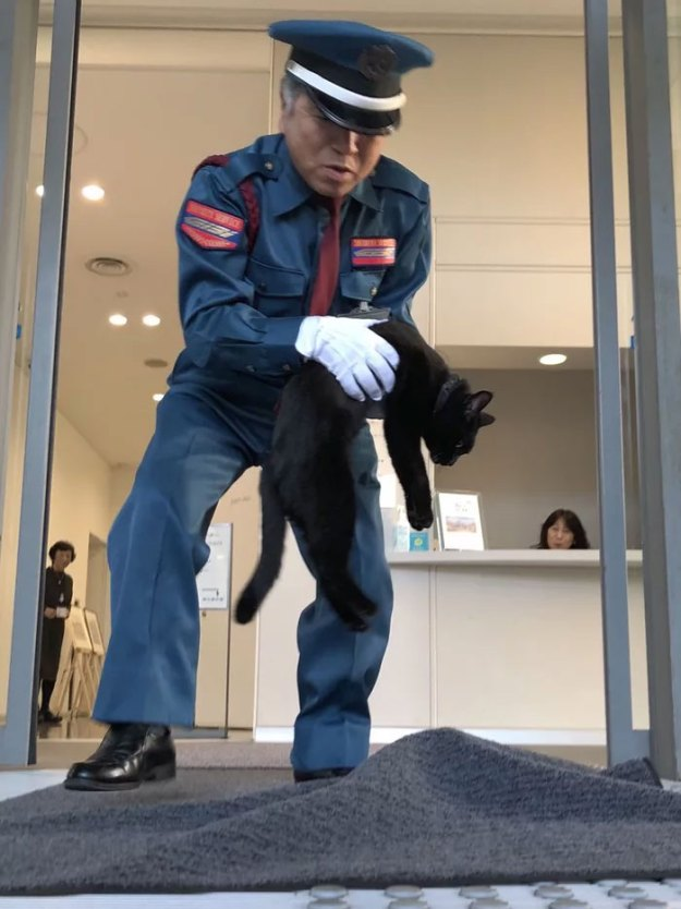 03-5bee74f22bb0f__700 Two Cats In Japan Have Been Trying To Sneak Into A Museum For Years (30 Pics) Design Random